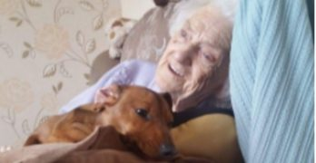 Dog Cheers Granny with Alzheimer's & Internet Goes Bazoo