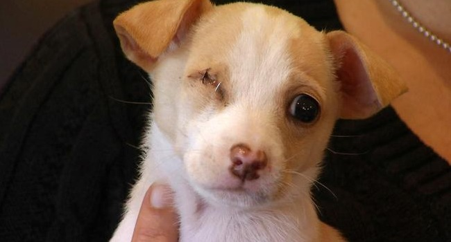 """Ivy the One-Eyed """"Dumpster Pup"""" On Road to Recovery"""