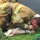 Santa Monica's Bravest! Firefighter Saves Dog with Mouth-to-Snout Resuscitation