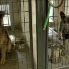 12 German Shepherds Rescued From Horrendous Conditions at CO Puppy Mill