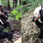 Blind Dog Found Alive After 8 Days in the Santa Cruz Mountains!