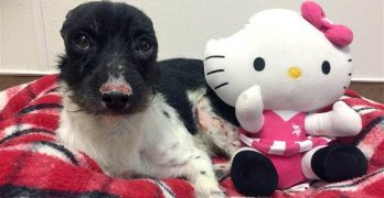 Dog Who Lost His Ears Gets Earless Doll To Cuddle