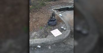 "SC Dog Abandoned with Note: ""Free Pup…. Owner Went to Jail Today."""