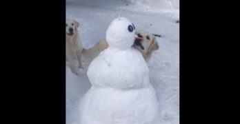 Sorry, Olaf!!! Dog Steals Carrot Nose Off Unsuspecting Snowman