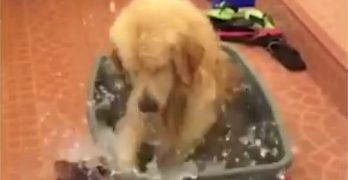 Dog Overjoyed By Water in a Trash Can