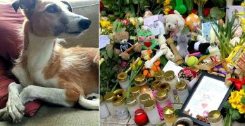 One Man's Tribute Sparks a Huge Memorial for Dog Killed in Stockholm Attack
