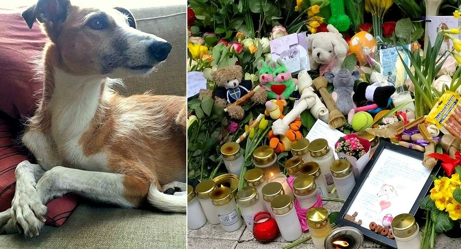 One Man's Tribute Sparks a Huge Memorial for Dog Killed in Stockholm Attack