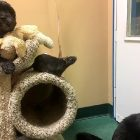 Bonded Cat, Rat, and Dog Adopted Together