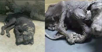 PLEASE HELP!!!  Hundreds of People Passed this Poor Dog by on the Street and He NEEDS Our Help