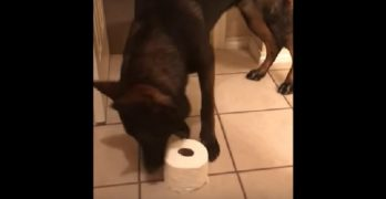 Clever Dog Learns a Trick ALL Dogs Should Be Taught!