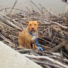 Dog Who Was Stuck on a Pile of Driftwood in a River for Days Is Finally Rescued