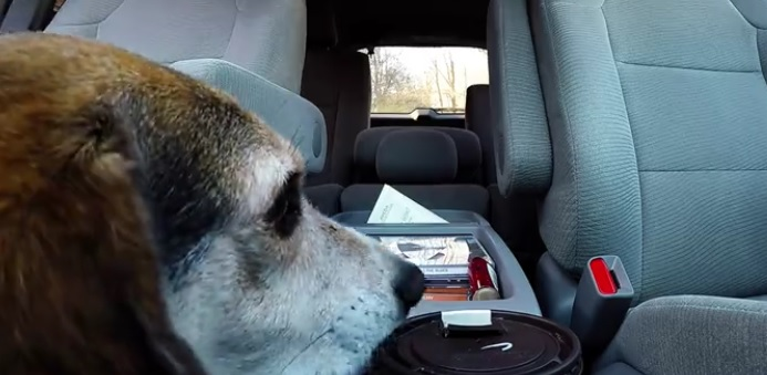 Crafty Dog Absconds With His Human's Coffee While no one was Looking