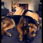 Rocco and Duke Are a Pair of Brothers Who Need a Home Together
