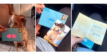Dad Still Sends His Dog of Divorce a Birthday Present Every Year