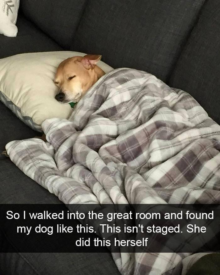 Itttttt Sss Snapchat Saturday Life With Dogs