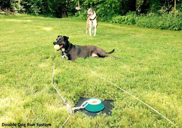 Dog Run Cable System Bing Images