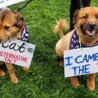 Dogs Marched for Science on Earth Day, Too!