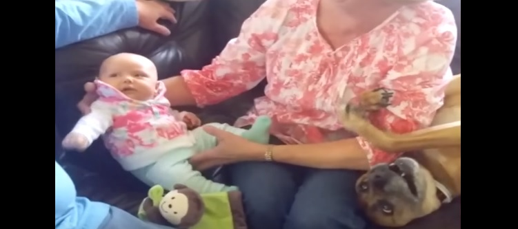 """Poor Dog Doesn't Want to Give Up His Position as """"Baby of the House"""""""