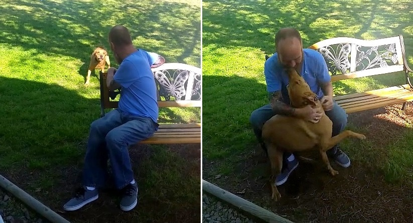 This Man's Dog Didn't Recognize Him Until He Gave Him a Sniff