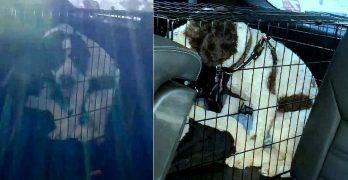 Good Samaritan Smashes a Car Window to Save a Dog Who Was Baking to Death