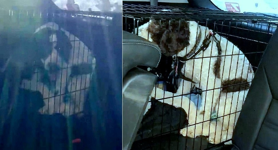 Good Samaritan Smashes a Car Window to Save a Dog Who Was Baking to Death