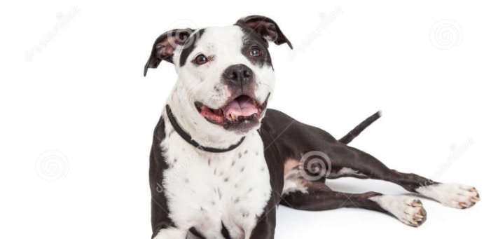 """Maine Animal Welfare Advisory Council Meets to Revamp Draconian """"Dangerous Dog"""" Laws"""
