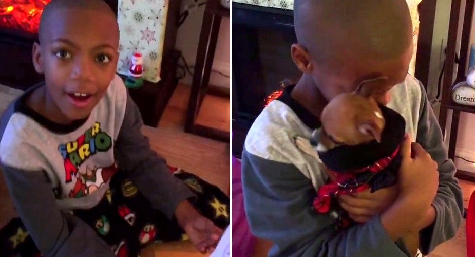 Mom Surprises Her Son by Adopting the Foster Dog He Fell in Love With