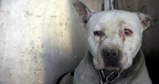 "Chained Dog Who Spent Her Life ""Crying"" Is Now Getting to Have a Puppyhood"