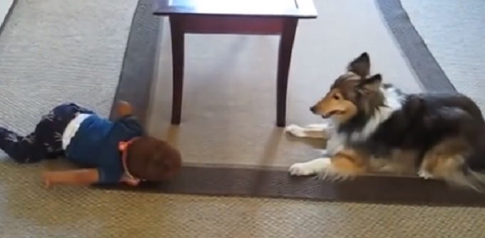 Hilariously Hyper Puts Little Baby in Stitches With Silly Behavior