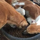 Rescue Dog Was So Happy to Have Food That He Lay Down in His Bowl to Eat