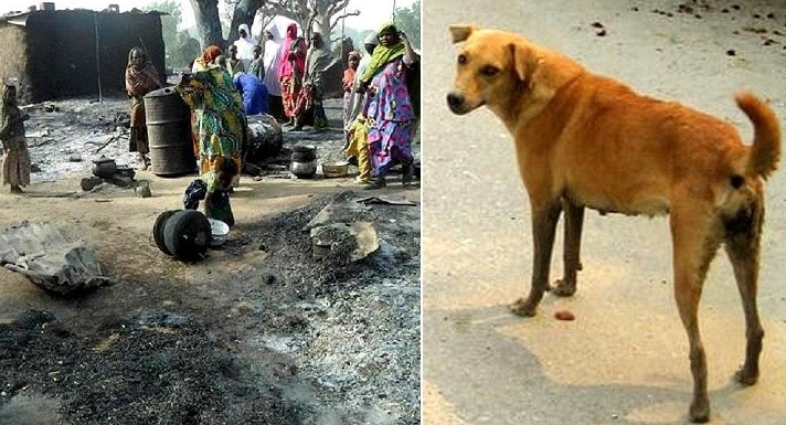 Heroic Dog Sacrifices Its Life to Save a Wedding Party from a Suicide Bomber