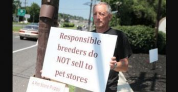 Man Finally Heeds Call from Protesters to Close His Shop and Turn to Rescuing Dogs Instead