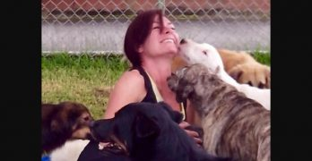 Woman Takes In Hundreds of Unwanted Dogs After a Shelter Visit Changed Her Life Forever