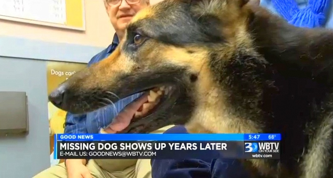 Dog Who Was Missing for FOUR YEARS Shows Up on Her Own Doorstep