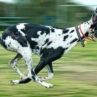 15 Dog Breeds Most Likely to Run Away
