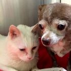 Cirrus the Cat and Chubbs the Dog Are a Special Bonded Pair Who Really Need a Home Together