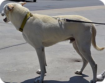 Dog Days Rescue Simi Valley