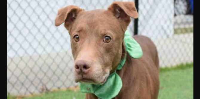 Poor Precious Is Terrified of the Shelter and Needs a Calm Home With Kind People