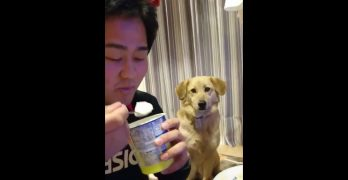 Too Proud To Beg? This Dog's Surreptitious Food Stalking is Hilarious!