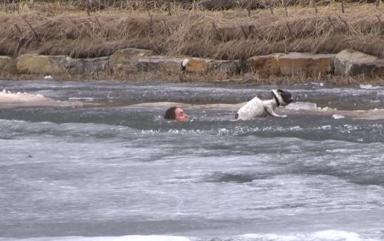 When His Dog Fell Through The Ice, He Didn't Hesitate To Jump In