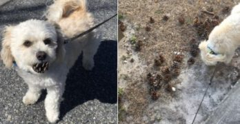 "Ocean City's ""Pine Cone Dog"" Is A Viral Sensation"