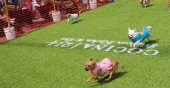 "Orlando-Area Eatery Extends Cinco de Mayo With ""The Running of the Chihuahuas!"""