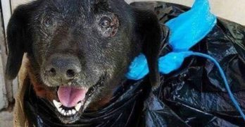 They Brought Her To The Shelter In A Black, Plastic Garbage Bag….
