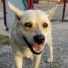 She Was So Terrified She Had To Be Dragged Into The Shelter on a Rope. Now She Will Find A Loving Home.