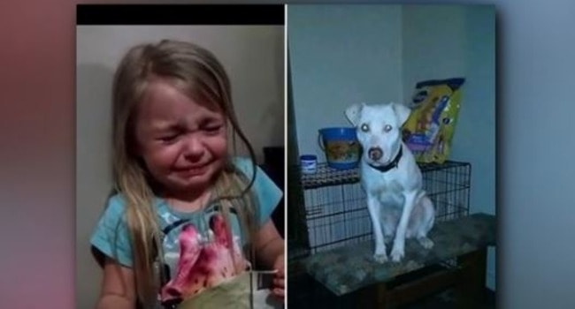 Her Tearful Plea Nearly Broke The Internet … Now Her Dog Is Home Safe & Sound