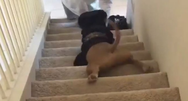 When You're Too Lazy To Walk Down The Stairs….