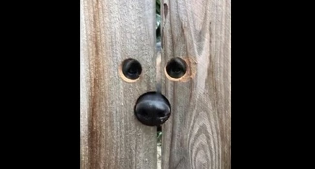When You've Had Enough of the Neighbors' Jumping Dog…!