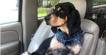 Stryker's Pose! Southern Hound Chillaxes On His Freedom Ride North