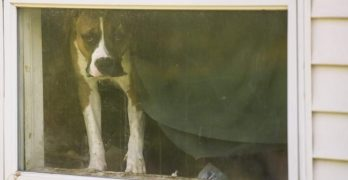 """9 Dogs, 3 Cats Rescued From """"Deplorable"""" Conditions in Pennsylvania"""