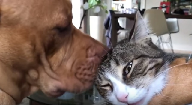 Rescue Pup Gives Nico the Cat a Solid Scrubbing Because Cleanliness Is Next to Godliness!